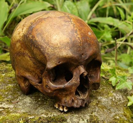 Skull on altar stone